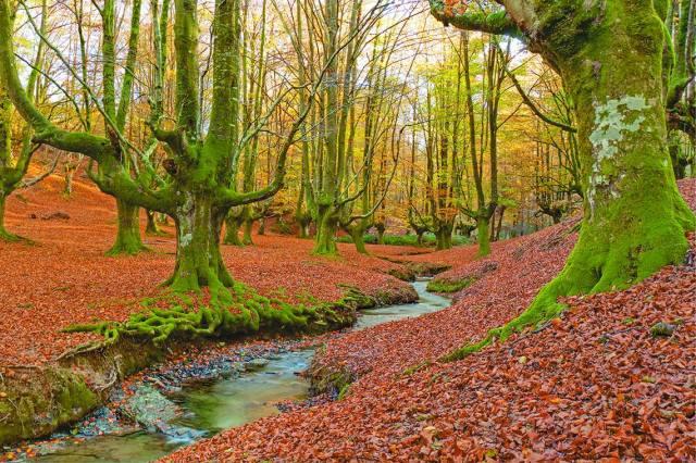 Otzarreta euskadi gorbeia monte turismo basque country montañismo paseos paisaje