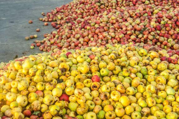 La sidra guipuzcoana se elabora con diferentes tipos de manzanas ácidas y amargas
